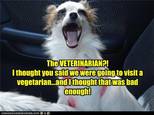 The VETERINARIAN?! I thought you said we were going to visit a vegetarian...and I thought that was bad enough!