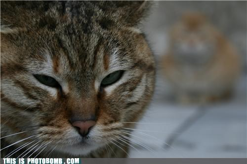 animals,Cats,Caturday,photobomb