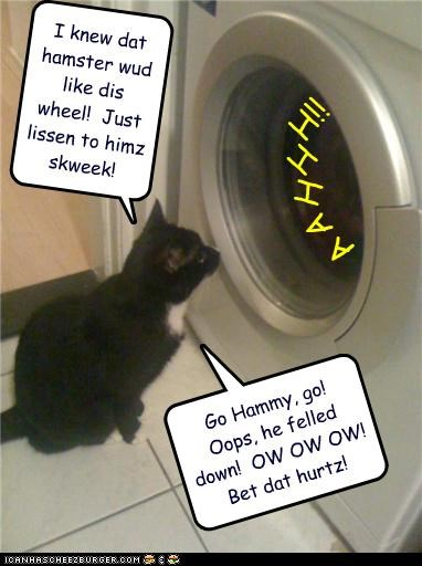 caption,captioned,cat,cheering,evil,excited,game,good idea,hamster,idea,mean,pain,washing machine
