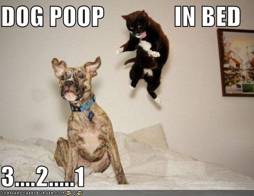 DOG POOP              IN BED  3....2.....1