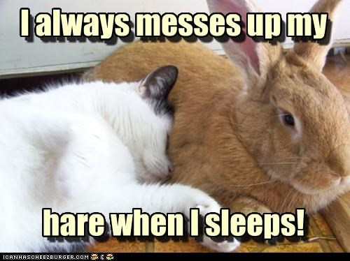 caption,captioned,cat,complaining,complaint,hair,hare,mess,problem,pun,sleep,sleeping,unhappy