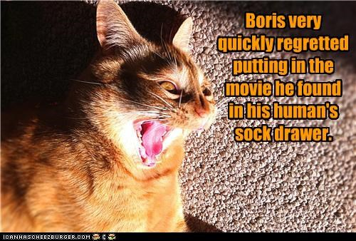 Boris very quickly regretted putting in the movie he found in his human's sock drawer.