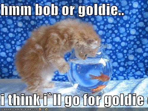 hmm bob or goldie..  i think i`ll go for goldie cause its sound pretty come here goldie