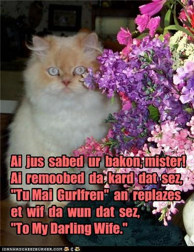 caption,captioned,card,cat,flowers,gift,help,helping,notes,present,replacing,saved