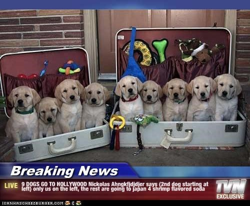 Breaking News - 9 DOGS GO TO HOLLYWOOD Nickolas Ahngkfjdjdjer says (2nd dog starting at left) only us on the left, the rest are going to japan 4 shrimp flavored soda