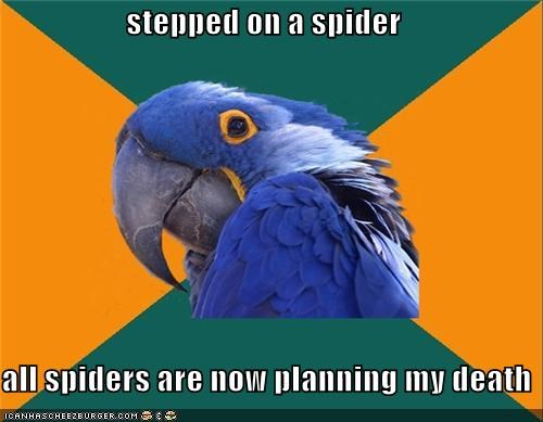 stepped on a spider  all spiders are now planning my death