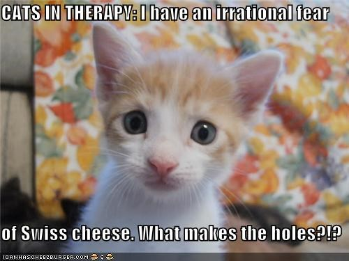 afraid,caption,captioned,cat,Cats,cheese,confused,fear,holes,irrational,kitten,question,scared,swiss cheese,therapy
