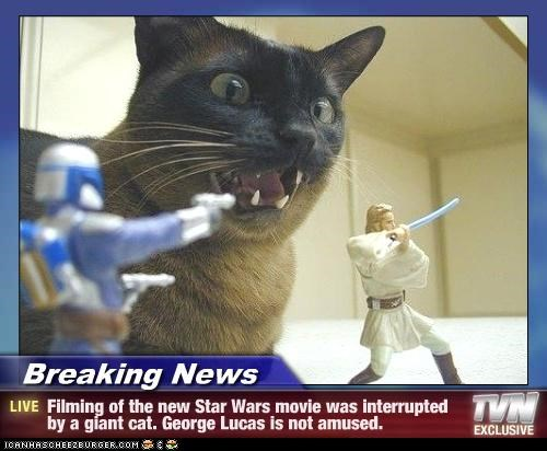 Breaking News - Filming of the new Star Wars movie was interrupted by a giant cat. George Lucas is not amused.