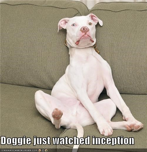 Doggie just watched inception