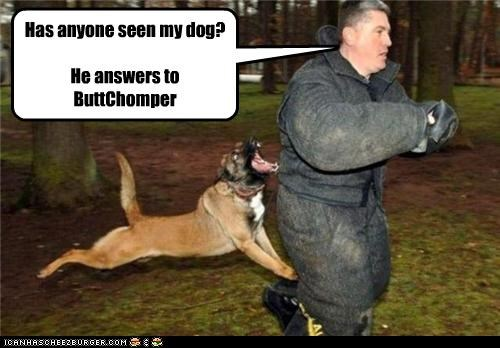 Has anyone seen my dog?   He answers to ButtChomper