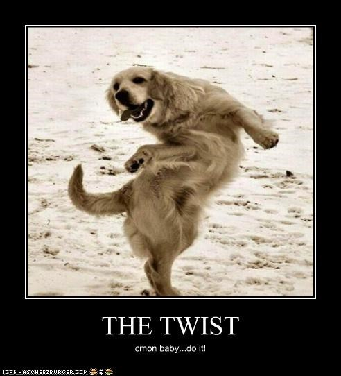 baby,come on,dance,dancing,do it,golden retriever,lyrics,song,style,twist,twisting