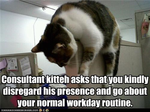 Consultant kitteh asks that you kindly disregard his presence and go about your normal workday routine.