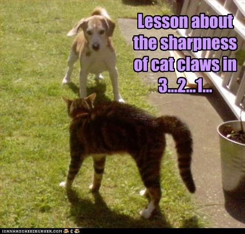 1,2,3,beagle,cat,claws,countdown,fighting,lesson,lessons,sharpness,versus