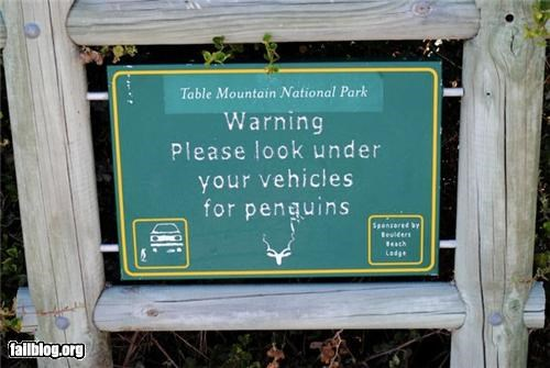 Oddly Specific: Only penguins...