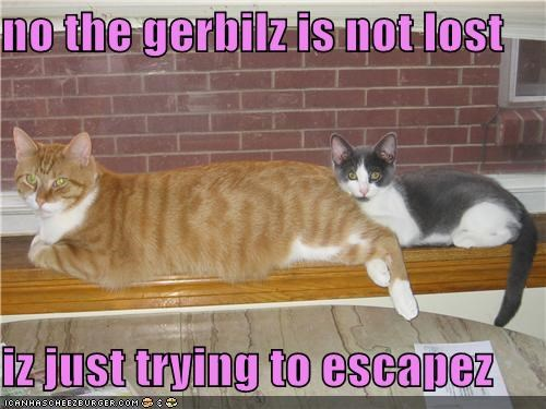 no the gerbilz is not lost  iz just trying to escapez