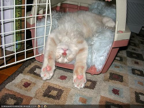 Cyoot Kitteh of teh Day: Wuz Gonna Get Up n Leev, But Den I Gotz Tyred...