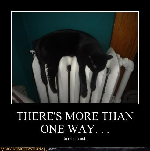 cat,melting,radiator