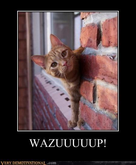 cat,window,wazup