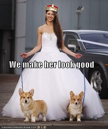 bride,compliment,corgi,corgis,dress,good,her,look,looking good,make,style