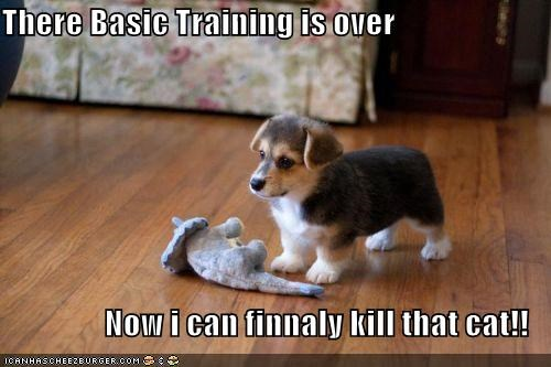 There Basic Training is over  Now i can finnaly kill that cat!!