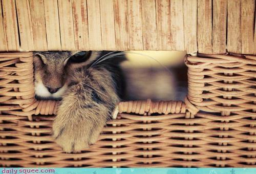 awake,bad mood,basket,cat,caution,cranky,grumpy,morning,peeking,upset,waking up,warning