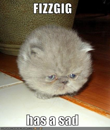 FIZZGIG  has a sad