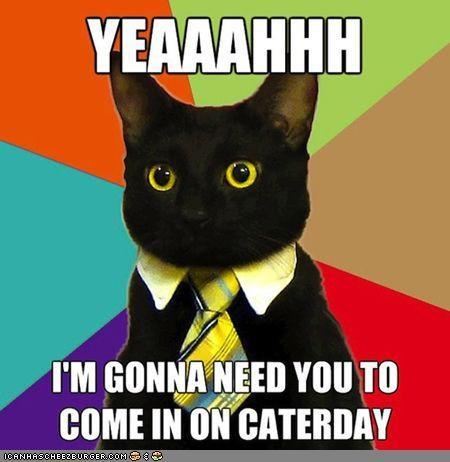 business,Business Cat,Caturday,memecats,Memes,Office Space,sucks,tie,work