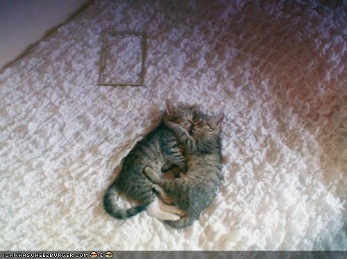 asleep,bed,Cat Nap,cyoot kitteh of teh day,hug,together,two cats