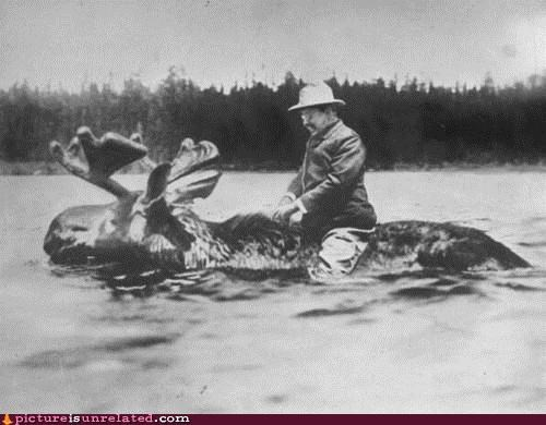 history,moose,teddy roosevelt,vintage,water,wtf