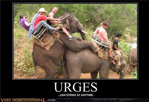URGES