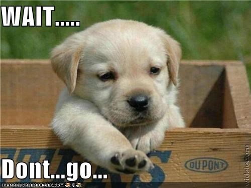 begging,dont,go,labrador,paw,please,puppy,reaching,wait