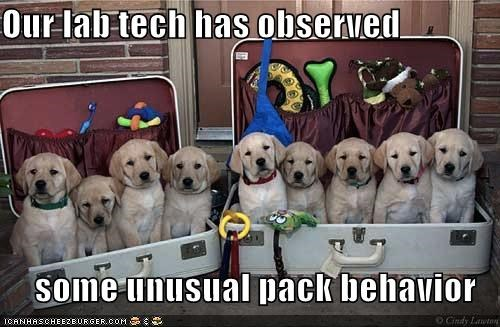 Our lab tech has observed  some unusual pack behavior