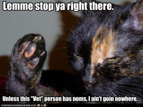 caption,captioned,cat,disinterested,do not want,noms,objection,stop,ultimatum,unless,vet
