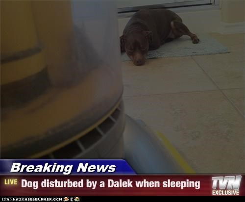 Breaking News - Dog disturbed by a Dalek when sleeping