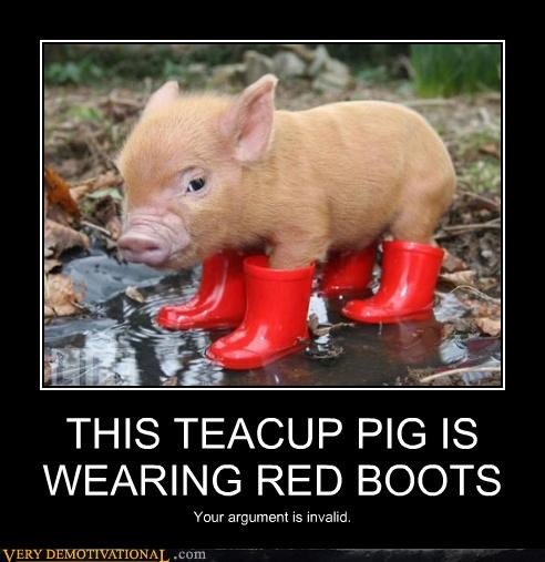 THIS TEACUP PIG IS WEARING RED BOOTS