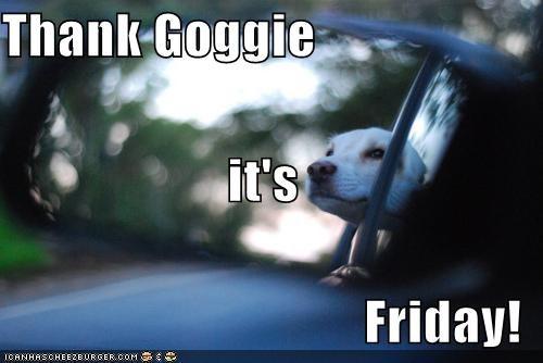car,car ride,driving,happy,labrador,mirror,reflection,riding,thank-goggie-its-friday