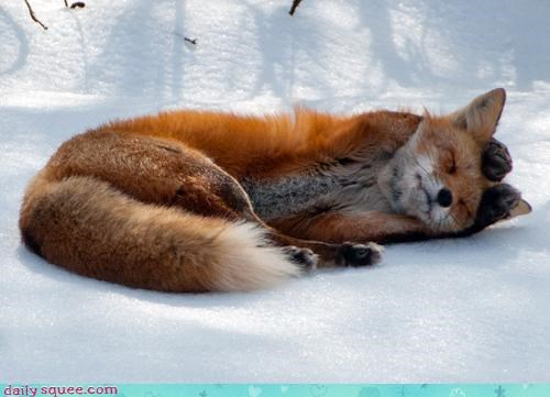 acting like animals,bambi,covering,do not want,ears,fox,lies,listening,Movie,not,upset,watching