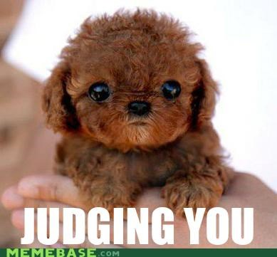 Baby Chewbacca Can See Into Your Soul.