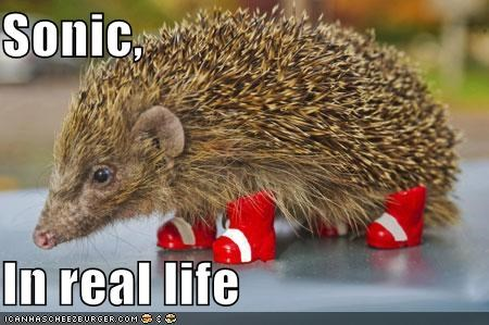 Sonic,  In real life
