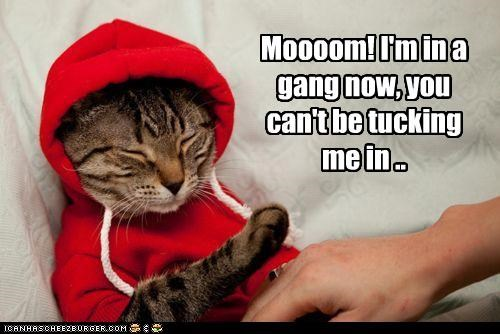 bed time,caption,captioned,cat,do not want,embarrassed,gang,hoodie,mom,now,protesting,tucking in