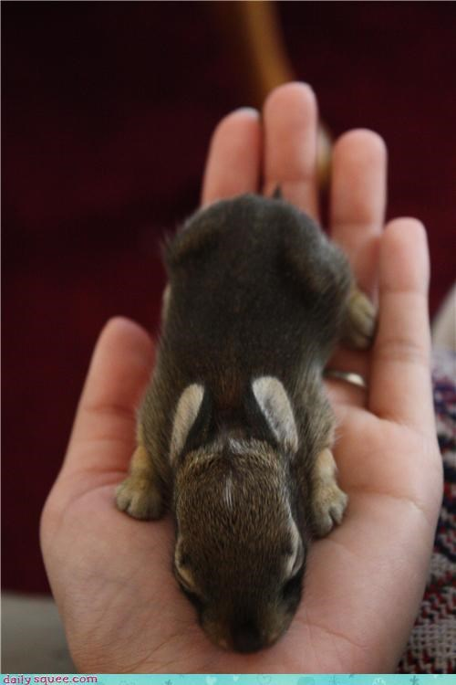 adage,adorable,baby,bird in the hand,bunny,hand,holding,investment,million,rabbit,rewrite,sleeping,squee,worth