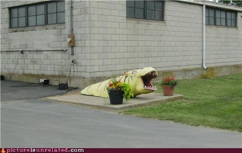 Hippo-Tiger