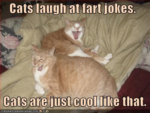 Cats laugh at fart jokes.     Cats are just cool like that.