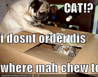 CAT!? i dosnt order dis where mah chew toy