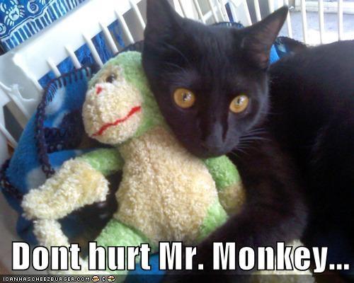 Dont hurt Mr. Monkey...