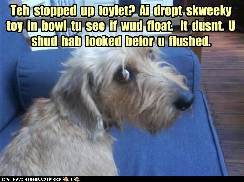 Teh  stopped  up  toylet?  Ai  dropt  skweeky  toy  in  bowl  tu  see  if  wud  float.   It  dusnt.  U  shud  hab  looked  befor  u  flushed.