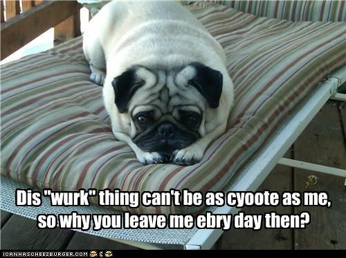 begging,cant,comparison,confused,cute,do not want,every day,jealous,leaving,pug,puppy eyes,Sad,work