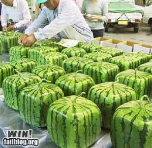 Square Watermelon WIN