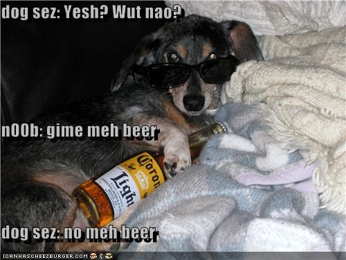 dog sez: Yesh? Wut nao? n00b: gime meh beer dog sez: no meh beer