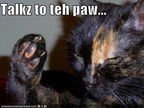 Talkz to teh paw...